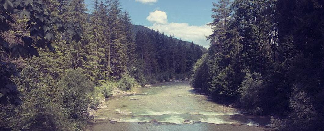 Ein Platz am Waldfluss