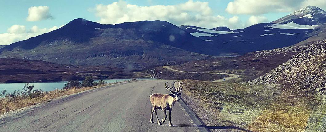 YogaGypsy Roadtrip Lofoten